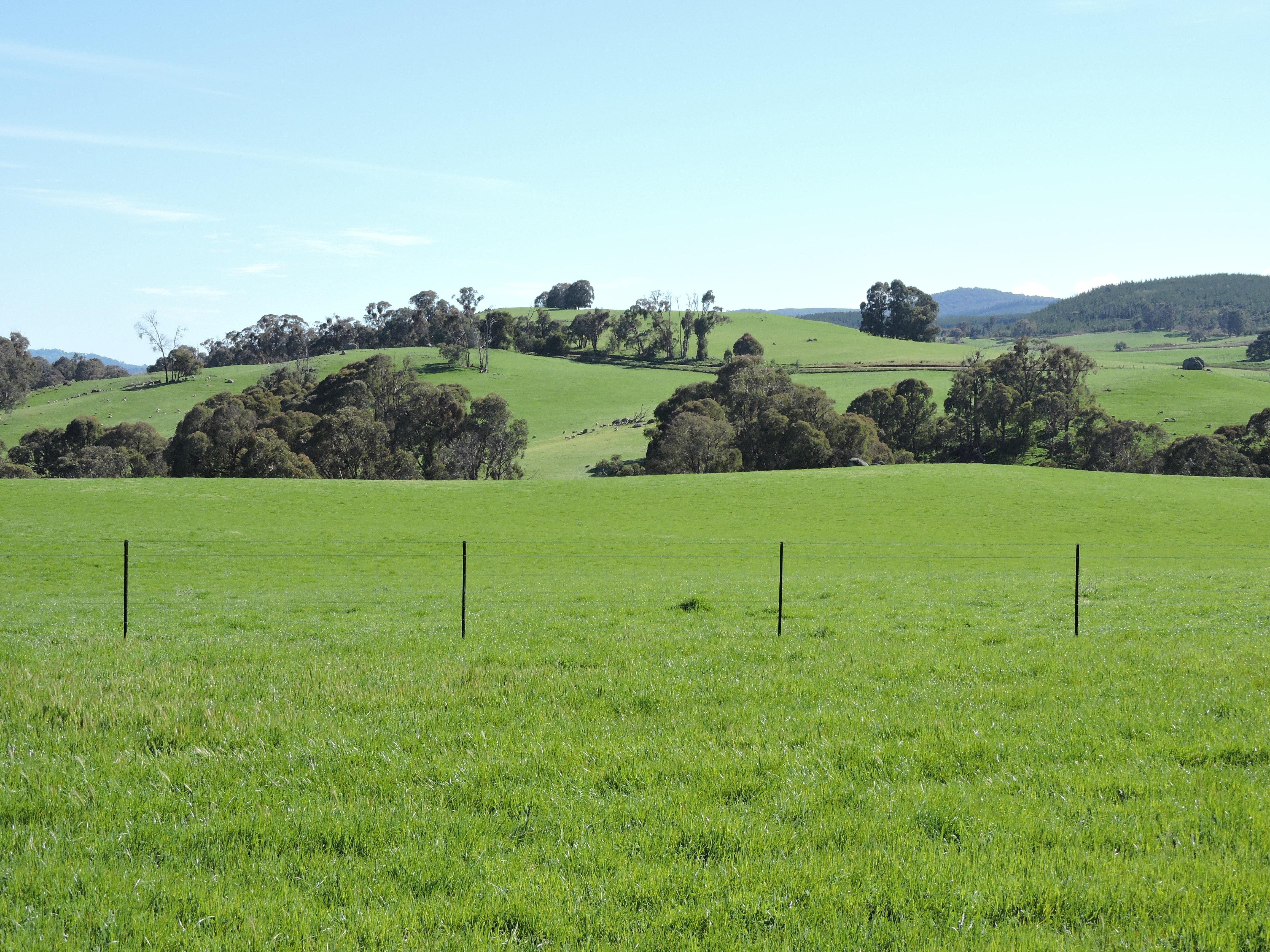 Green paddocks