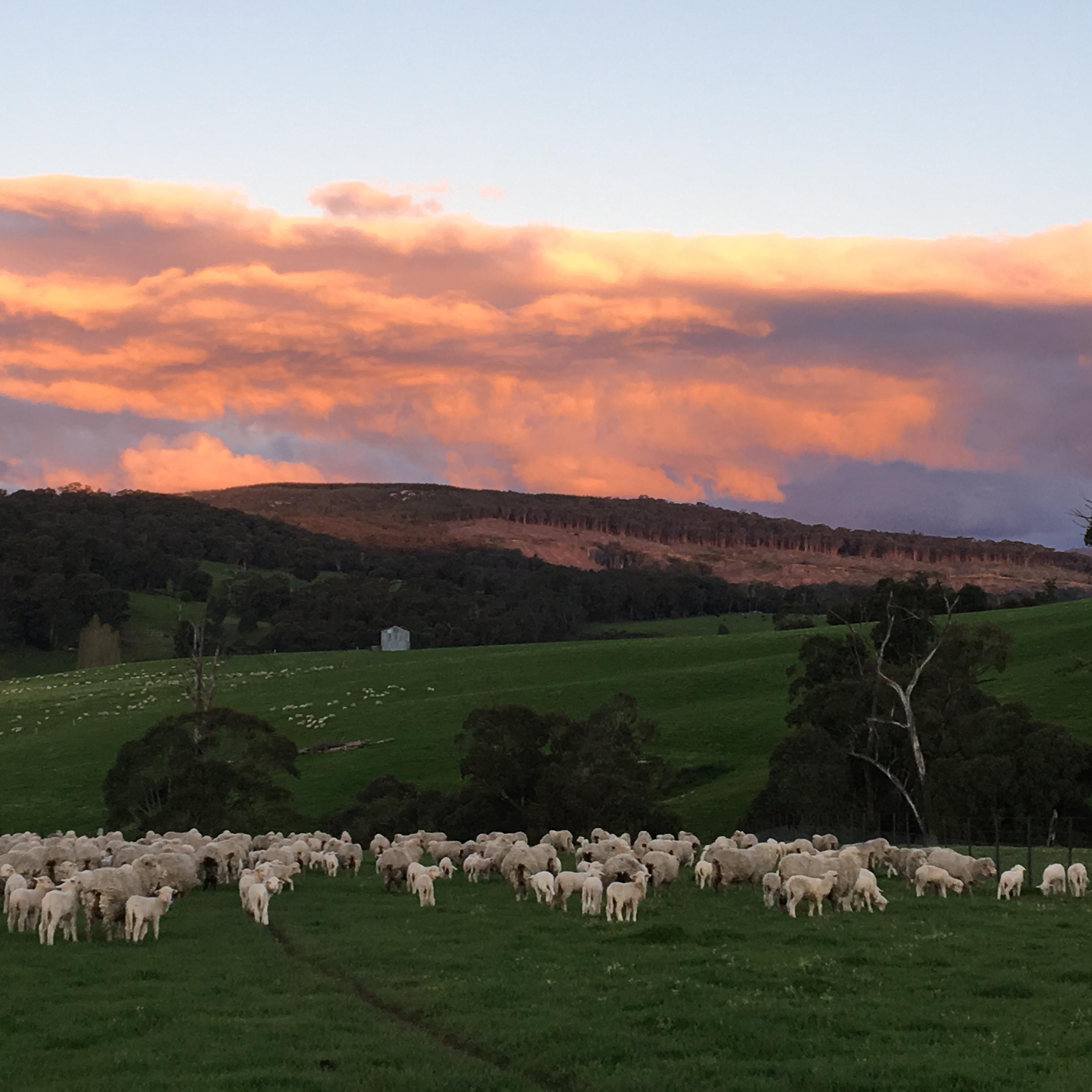 Sunset over Burbidge Farms