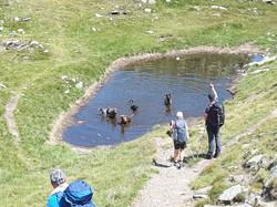 Alpenüberquerung mit Hunden See
