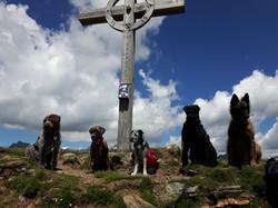 Alpenüberquerung mit Hund Gipfel