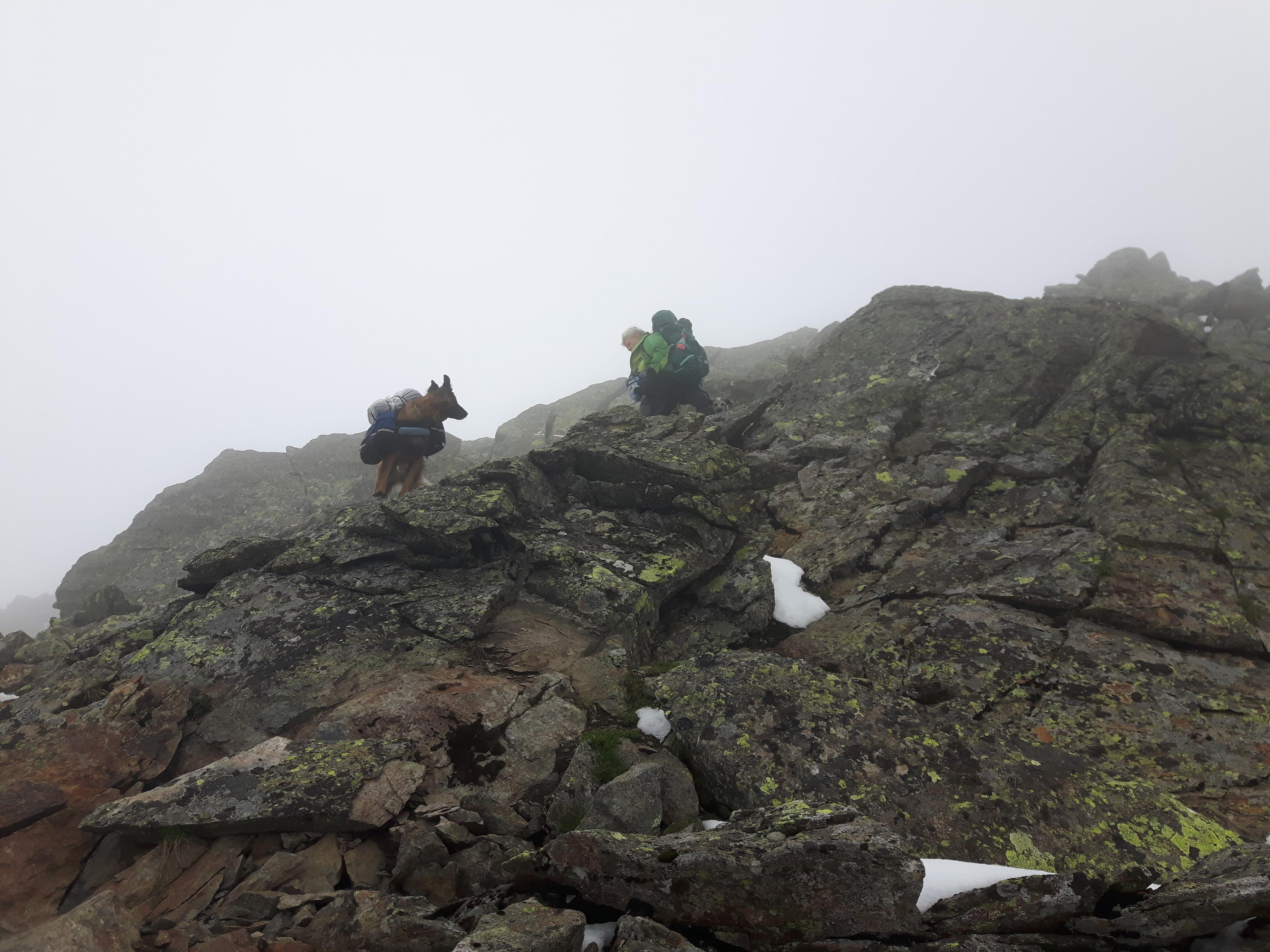 Alpenüberquerung mit Hunden , Windac