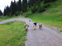Alpenüberquerung Hundegruppe