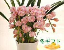 【知っていると便利】名古屋市内で花屋に行くなら …
