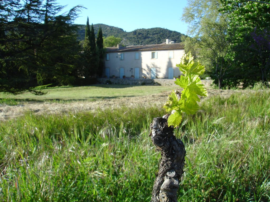 Vigne_chateau-1024x768.jpg