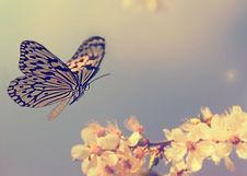 Reiki in London, my spiritual butterfly