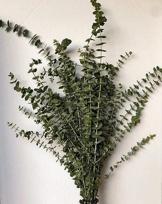 Fresh Cut Eucalyptus