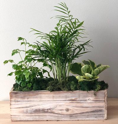 Tropical Planter Box