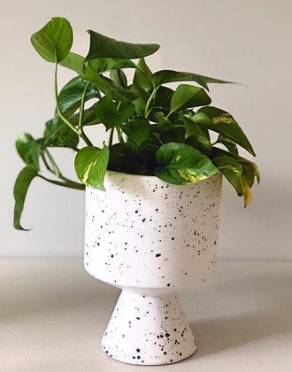 Pothos Plant with De Vil Pot