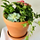 Thumbnail: Mother's Day Planters