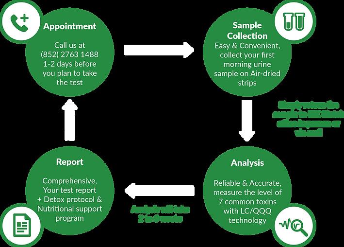 The Testing Process(Environmental Toxins