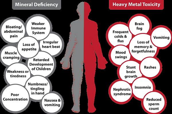 Mineral Deficiency, Heavy Metal Exposure