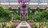 Longwood Gardens in the conservatory