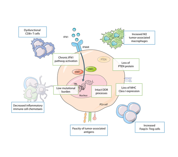The Tumor Immune Contexture of Prostate Cancer