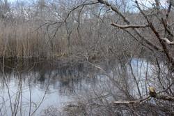 River in Back