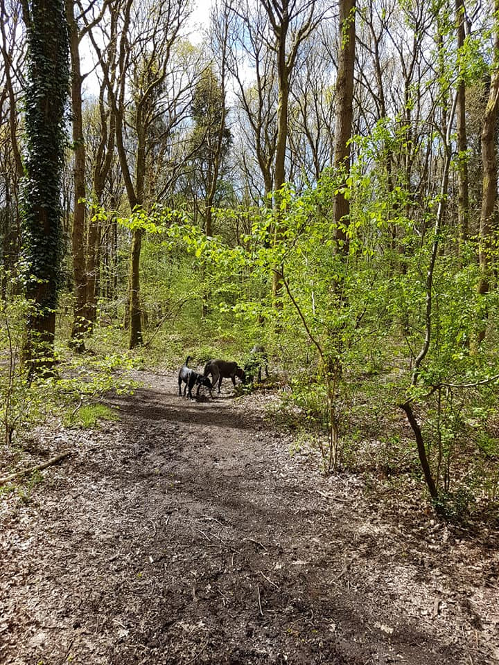 Sniffing In the Woods