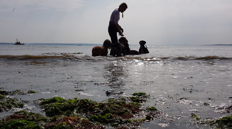 Joining The Dogs For A Paddle