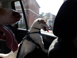 Ted in the Holty Paws MPV (Multi Pet Vehicle)