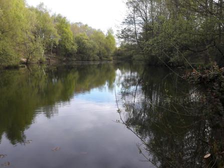 Swanwick Lakes