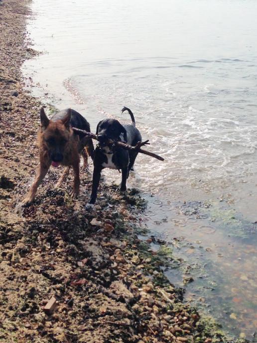 Pola & Harvey on the Beach