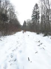 Winter in Whiteley