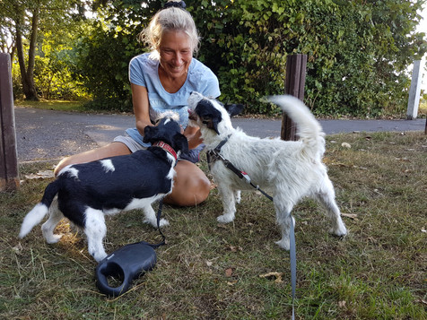 Treat Time on a Hamble Group Dog Walk With Holty Paws