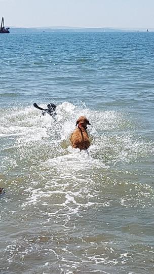 Swimming to the far shore