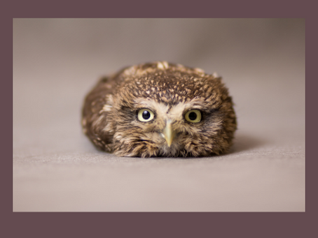 Are Night Owls Lazy and Unambitious?
