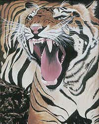 Yawning Tiger (Prints only)