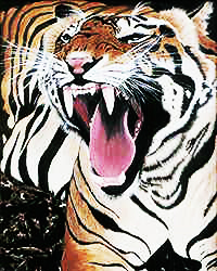 Yawning Tiger(Prints only available)