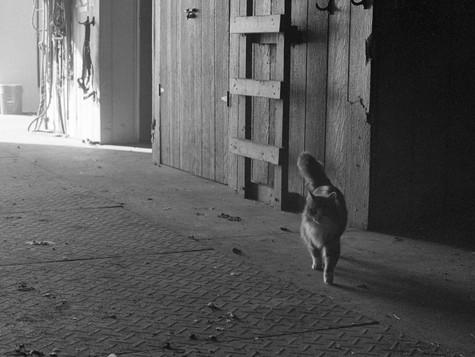 Barn Cat II