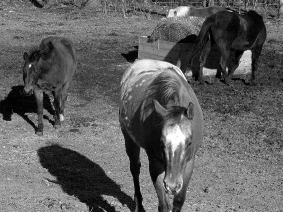 Back Pasture