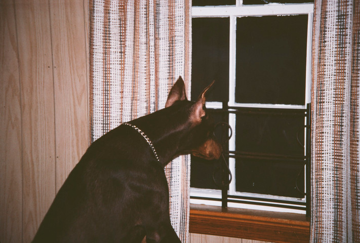 14 - dog watch.jpg