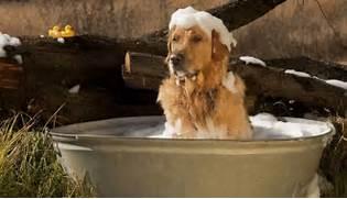 dog bath best
