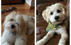 groomed dog photo