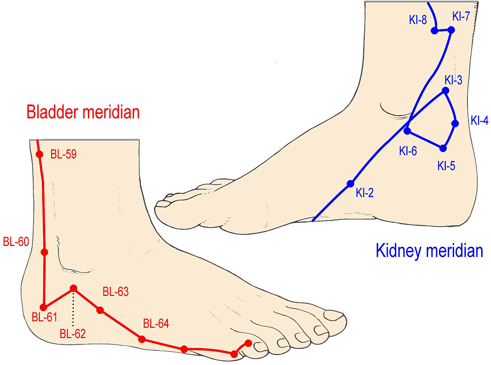bladder and kidney acupuncture meridians