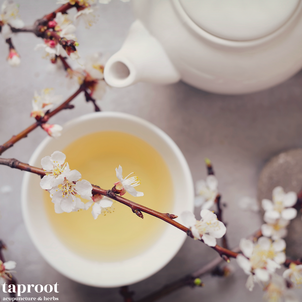 white tea with cherry blossom branches