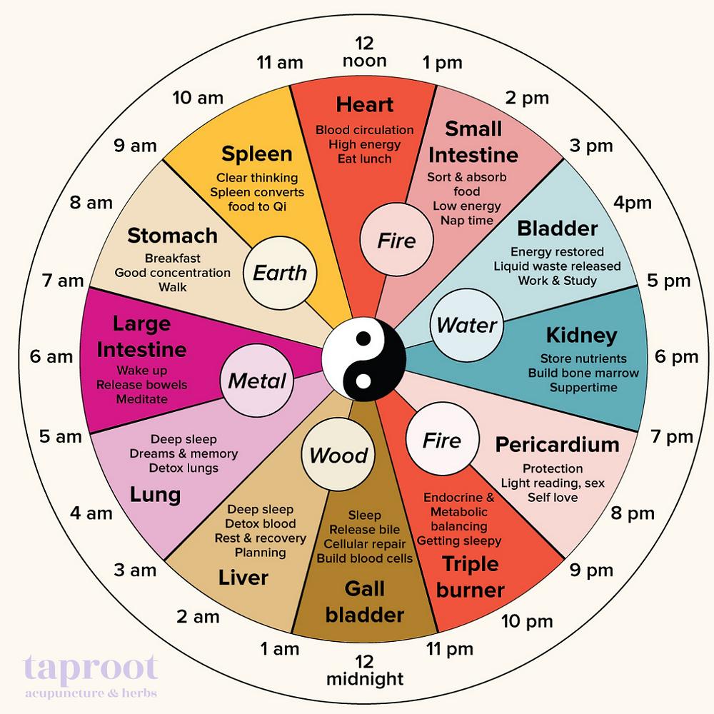 Chinese medicine circadian clock