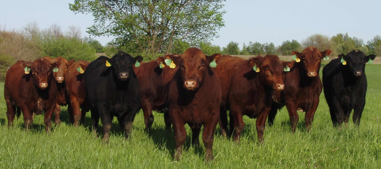 bulls08.jpg