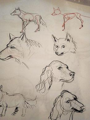 hunde.jpg