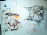 Zeichnen - Tiere