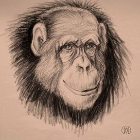 kluger Affe, Tiermalerei Kunstkammer.jpg
