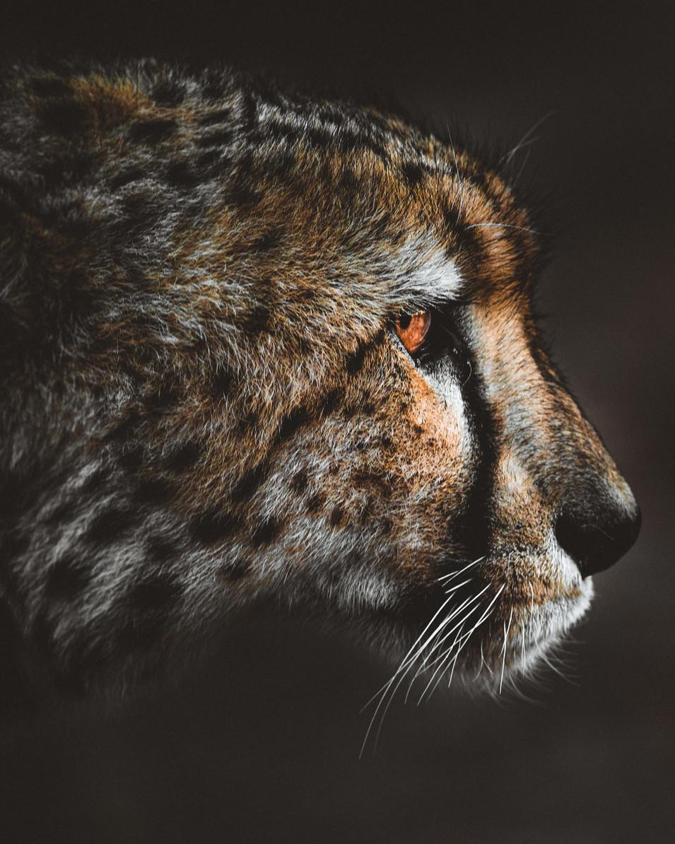 Norris Niman outdoor wildlife photos Wix 1
