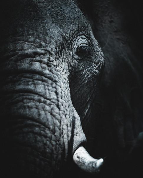 Norris Niman outdoor wildlife photos Wix elephant portrait