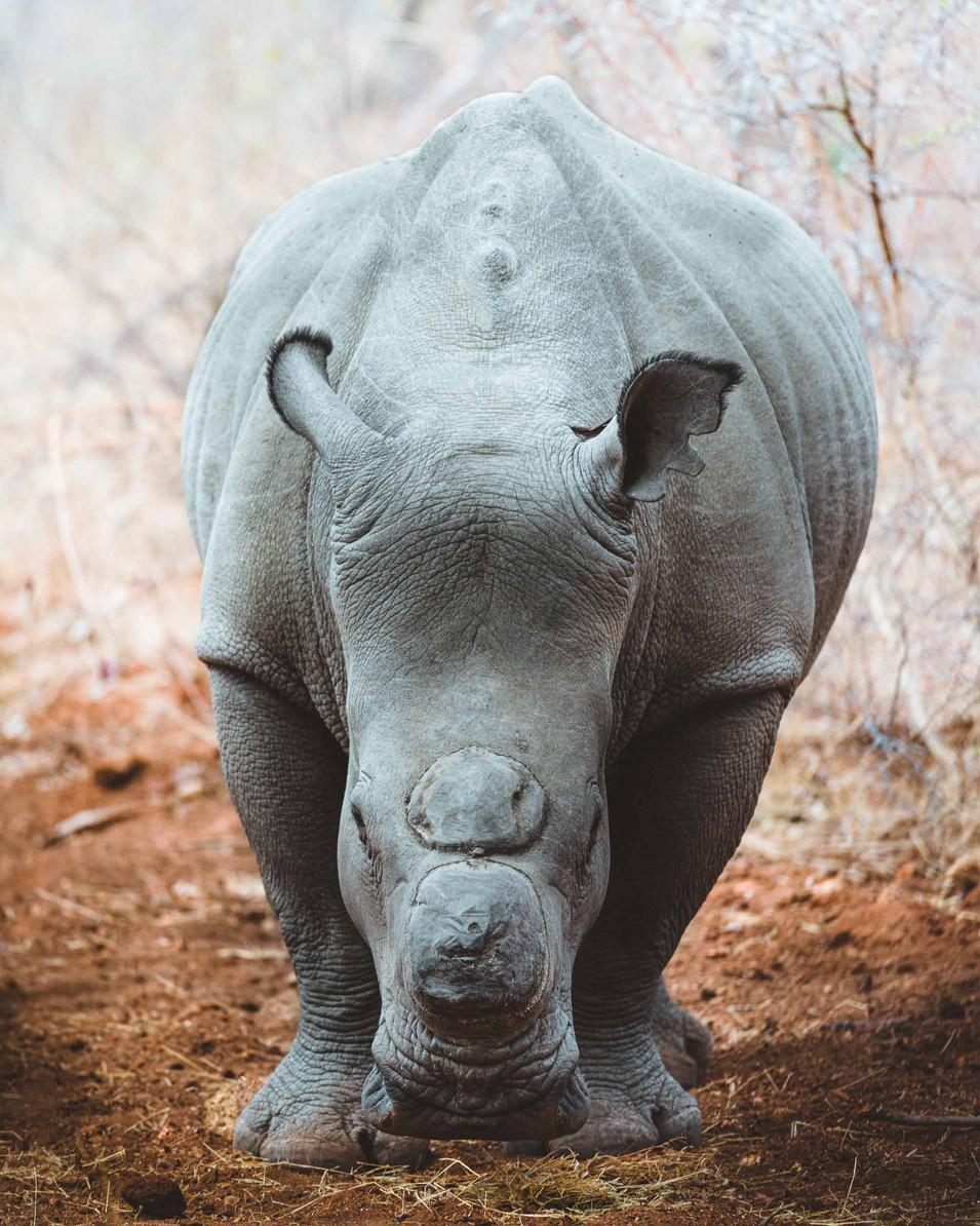 Norris Niman outdoor wildlife photos Wix rhino