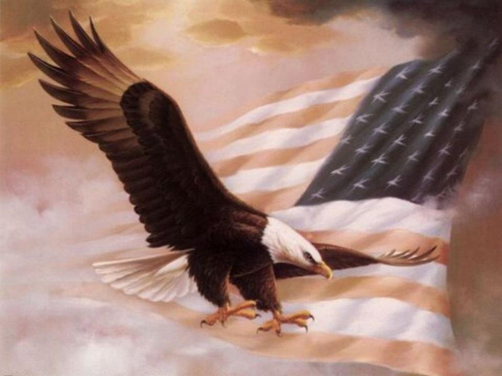 eagle7.jpg