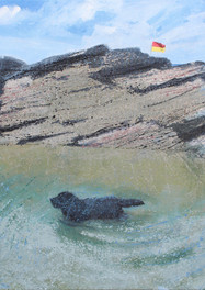 Dog in a rock pool, Trebarwith Strand.