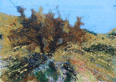 Stunted tree, Nare Head  #2