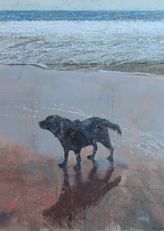 Dog on a beach, Porthcurnick