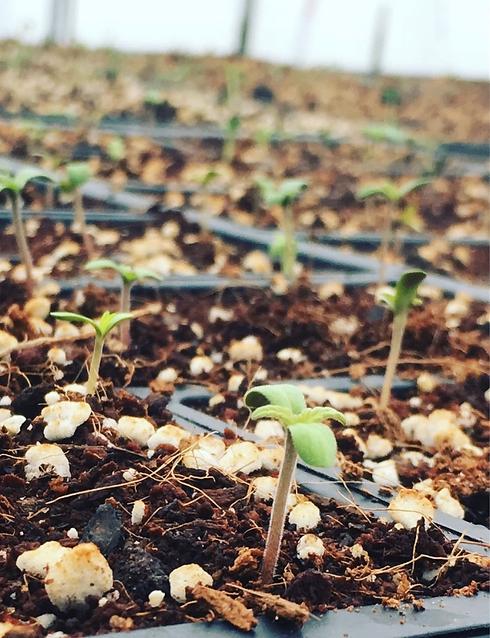 seedling2.png