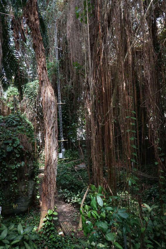 Rain Forest in Biosphere